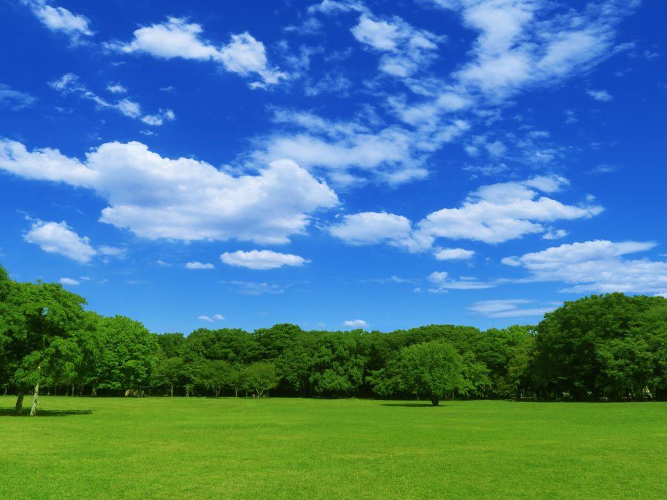 隣の芝が青く見える